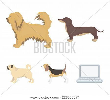 Pikinise, Dachshund, Pug, Peggy. Dog Breeds Set Collection Icons In Cartoon Style Vector Symbol Stoc