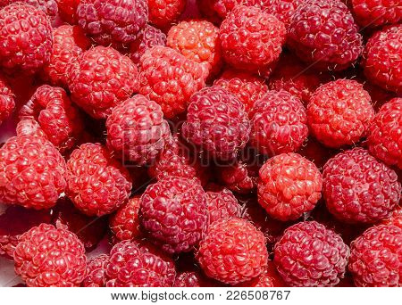 Berries Red Aromatic Delicious Raspberry In Bulk, Macrophotography