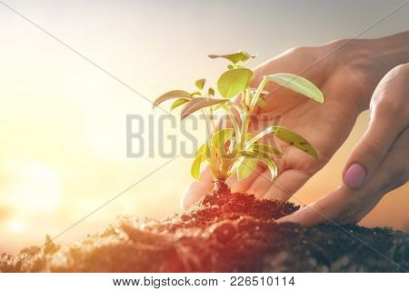 Concept of generation and development. Person is holding in hands green sprout. Spring, nature, eco and care.