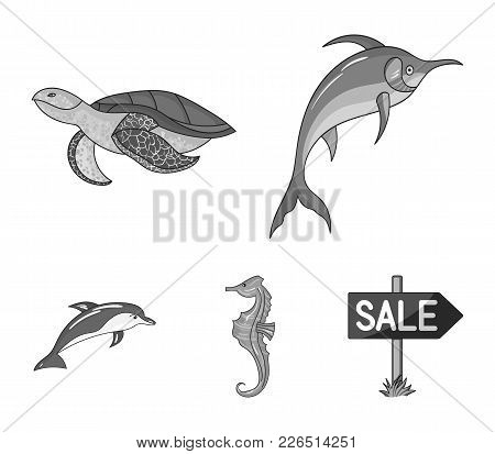 Merlin, Turtle And Other Species.sea Animals Set Collection Icons In Monochrome Style Vector Symbol