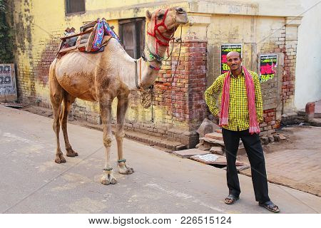 Agra, India - November 8: Unidentified Man Stands With A Camel In Taj Ganj Neighborhood On November