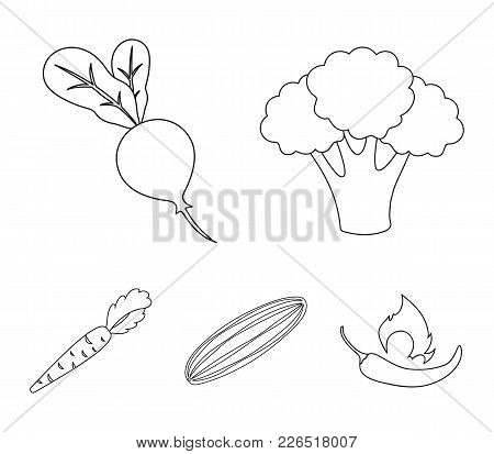 Broccoli Cabbage, Radish, Green Cucumber, Carrots With Tops. Vegetables Set Collection Icons In Outl