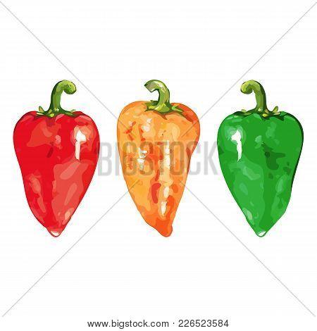 Watercolor Sweet Bell Bulgarian Pepper Vegetable Set Isolated Vector