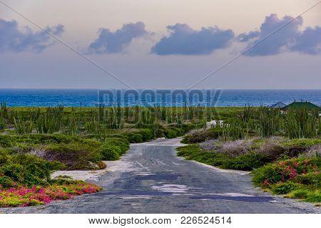 The Arid Nature Of Aruba. Arid Landscape.