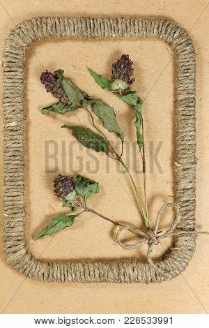 Herbarium. Prunella Vulgaris. Dry Plants In Framework Made Of Jute Thread. Scrapbooking.