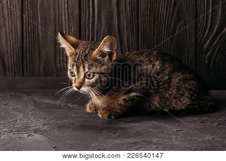 A Cute Little Kitten Sits On A Concrete Surface On A Wooden Background