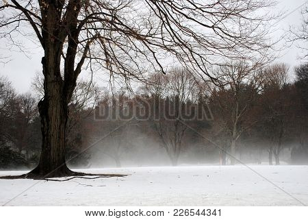 A Winter Landscape In Massachusetts With Bare Trees, Snow And Fog.