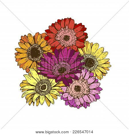 Bouquet Of Daisies Flower On White Background. Vector Set Of Blooming Floral For Wedding Invitations