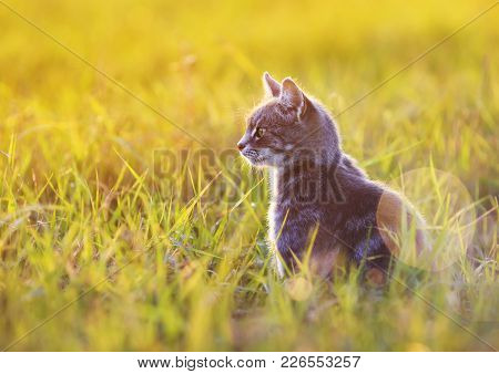 Beautiful Cat Sits In The Green Grass On A Sunny Meadow In The Summer