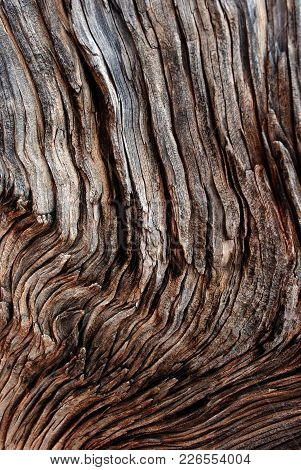 A Close Up Texture Of An Old Tree Bark That Is Showing Age.