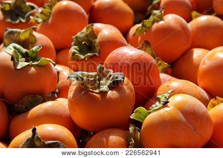 Harvest Ripe Persimmon Lies In The Container