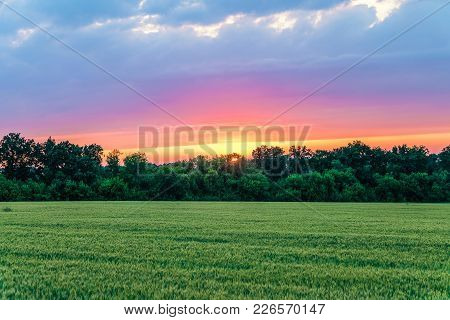 Countryside Landscape With Green Ripening Ears Of Wheat Field Under Cloudy Sky At Sunset. Agricultur