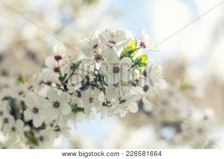Sunny Day. Spring Flowers. Abstract Blurred Background. Shallow Depth Of Field.
