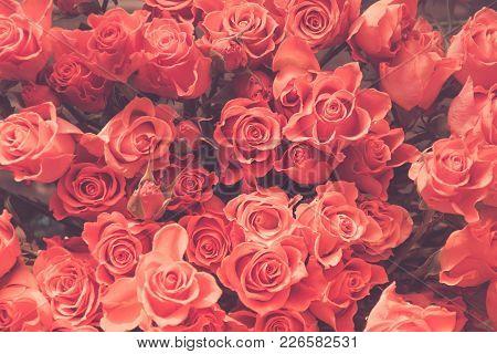 Orange Roses As Background. Spring Pattern. Vintage Matte