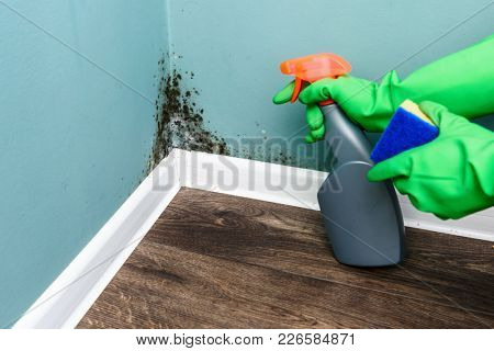 Spray bottle and sponge near black mould wall. House cleaning concept