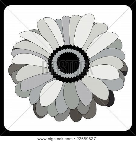 Black And White Flower, Gerbera In Grayscale, Pattern With A Stroke