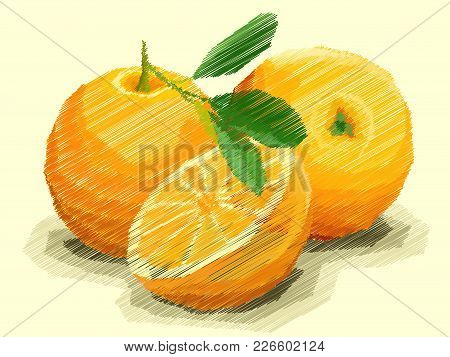 Vector Illustration Graphic Arts Sketch Of Drawing Fruit Oranges With Half.