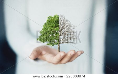 Tree On Hand, Green Energy, Life And Death