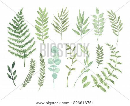 Vector Watercolor Illustrations. Botanical Clipart. Set Of Green Leaves, Herbs And Branches. Floral