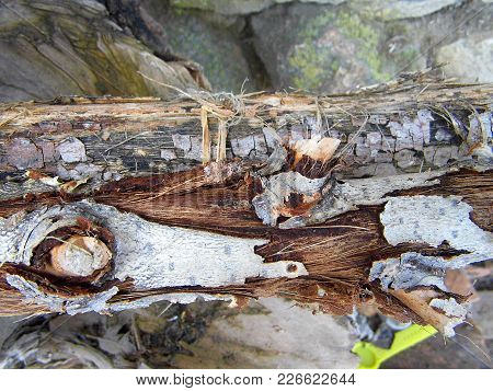 Rotten And Obsolete Large Pieces Of Wood,