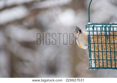 Snowflakes Fall As A Tufted Titmouse Lands On A Backyard Feeder. The Photographer Captured A Bokeh B