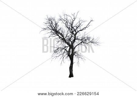 Isolated Tree. One Winter Tree Isolated On Awhite Background