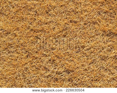 Completely Dry Yellow And Brown Grass. Thick Sun Dried Grass Covering The Ground Like A Dense Carpet