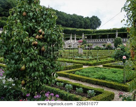 Garden At The Château De Villandry. Renaissance Gardens Include Ornamental Flower Gardens, And Veget