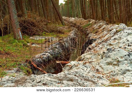 The Trench In The Pine Forest, The Groove For Laying Cable In The Forest, The Destruction Of The Env