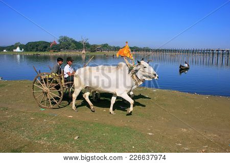 Amarapura, Myanmar - December 31: Unidentified People Ride In An Ox Cart On December 31, 2011 In Ama