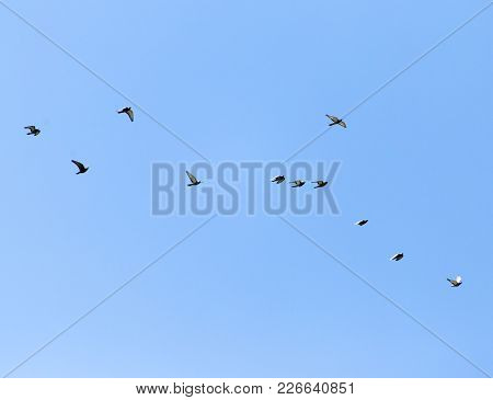 A Flock Of Pigeons In The Sky .