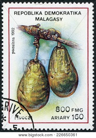 Madagascar - Circa 1992: Postage Stamps Printed In Madagascar, Is Shown Avocado (persea Americana),