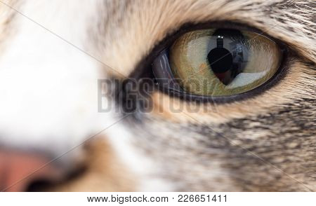 Extreme Close-up Of Green Cat's Eye.