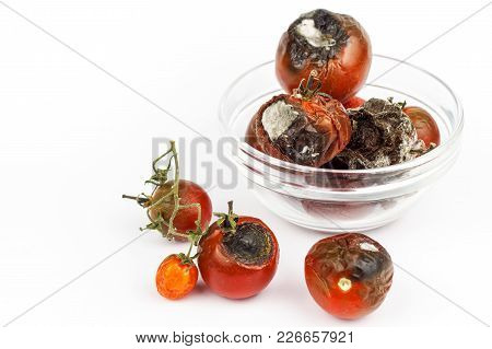 Moldy Tomatoes In A Glass Bowl On A White Background. Unhealthy Food. Bad Storage Of Vegetables. Mol