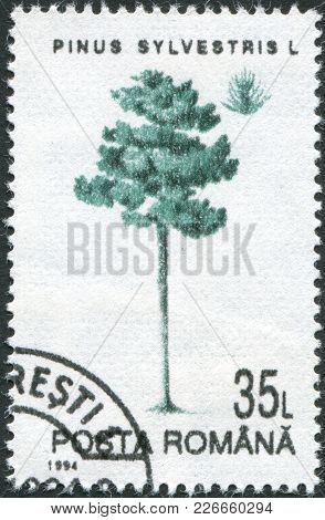 Romania - Circa 1994: A Stamp Printed In The Romania, Shows Scots Pine (pinus Sylvestris), Circa 199