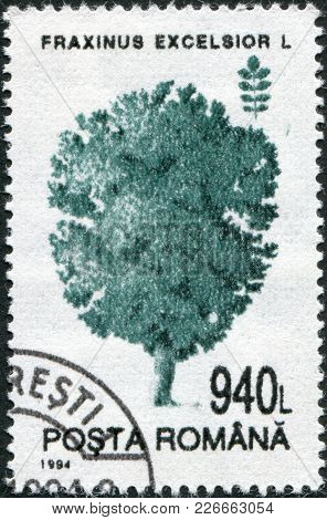 Romania - Circa 1994: A Stamp Printed In The Romania, Shows Fraxinus Excelsior, Circa 1994