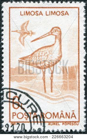 Romania - Circa 1991: A Stamp Printed In The Romania, Shows The Black-tailed Godwit, (limosa Limosa)