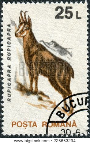 Romania - Circa 1993: A Stamp Printed In The Romania, Shows The Chamois, (rupicapra Rupicapra), Circ