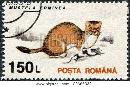 Romania - Circa 1993: A Stamp Printed In The Romania, Shows The Stoat (mustela Erminea), Circa 1993