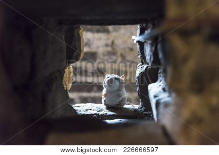 Plush Hamster Placed Near A Medieval Brick Wall, Portrait