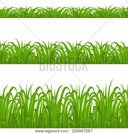 Set Of Green Grass Elements On White Background For Design