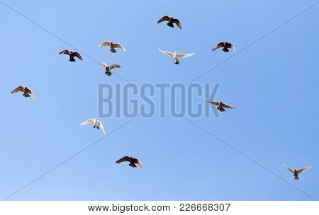 Pigeons On A Background Of Blue Sky .
