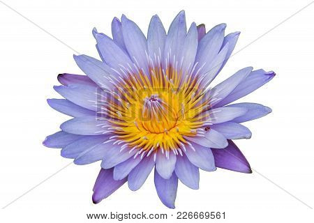 Lotus Flower Isolate White Background With Clipping Path