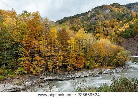 Environment, Freedom, Travelling Concept. There Are Yellow Trees Of Autumn Forest That Grows On The