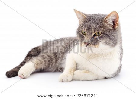 Gray Striped Cat Isolated On White Background