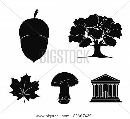 Oak, Acorn, Edible Mushroom, Maple Leaf.forest Set Collection Icons In Black Style Vector Symbol Sto
