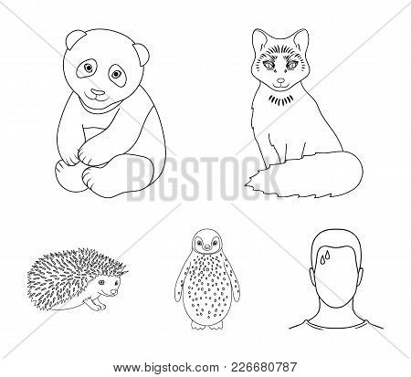 Fox, Panda, Hedgehog, Penguin And Other Animals.animals Set Collection Icons In Outline Style Vector