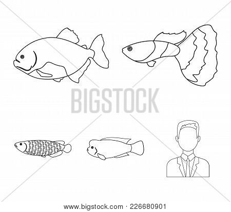 Frontosa, Cichlid, Phractocephalus Hemioliopterus.fish Set Collection Icons In Outline Style Vector
