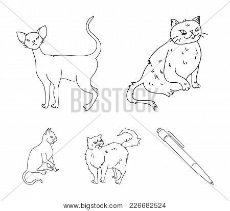 Persian, Cornish Rex And Other Species. Cat Breeds Set Collection Icons In Outline Style Vector Symb
