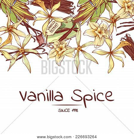 Vanilla Spice Poster For Advertising Company. Trendy Food Spice Or Parfum Industry Component Vector
